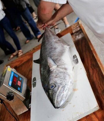 Weigh-in at Swansboro Five-0 King Mackerel Tournament
